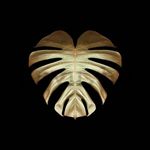Vászonkép - Alyson Fennell, Gold Deco Monstera